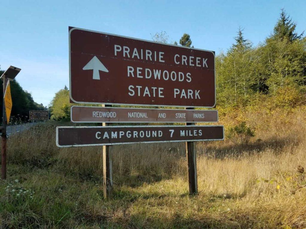 Bull Elks of Prairie Creek Redwoods State Park