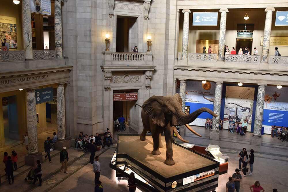 Washington Dc Smithsonian Museums